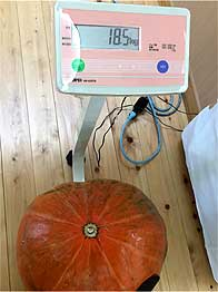 271030はろういんかぼちゃ