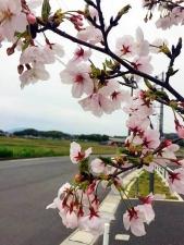 10170410桜