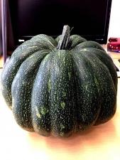 20170907かぼちゃ